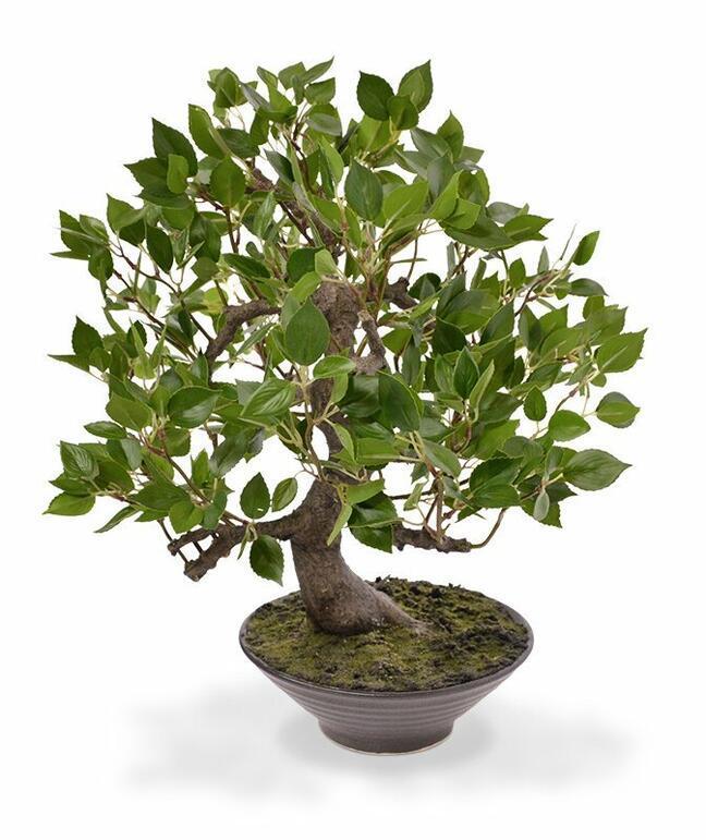 Artificial bonsai Fikus Wiandi 45 cm