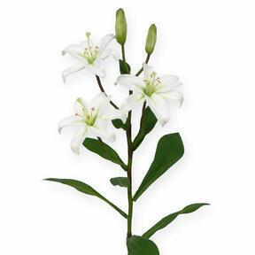 Artificial branch Lily white 50 cm