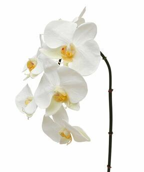 Artificial branch orchid white 55 cm