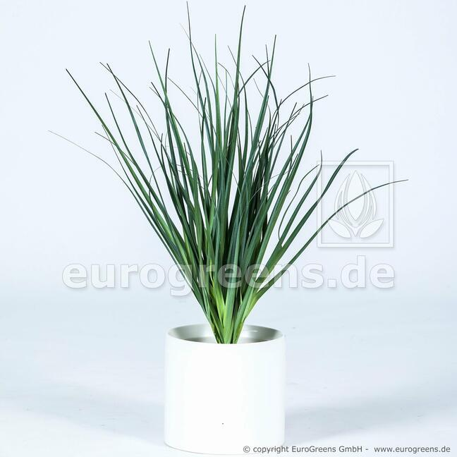 Artificial grooving bundle of grass Common reed 55 cm