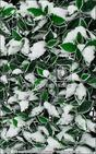 Artificial leaf panel Cherry - 50x50cm