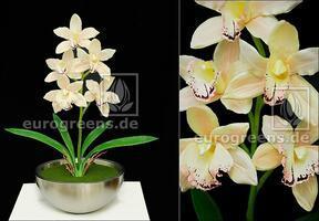 Artificial plant Orchidea Cymbidium cream 50 cm
