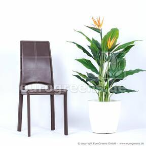 Artificial plant Shooting blooming 120 cm