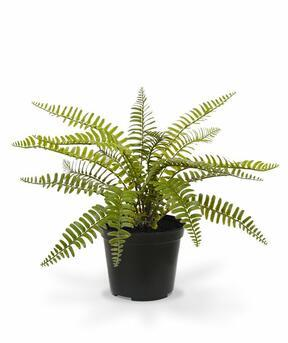 Artificial plant Spleenwort 35 cm