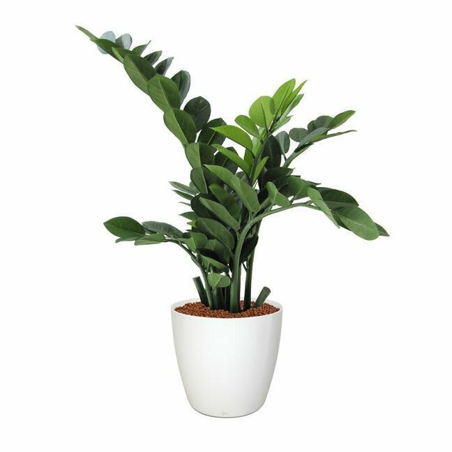 Artificial plant Zamiokulkas 65 cm